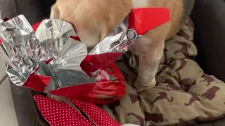 beautiful dog wanting to open your present!