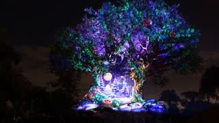 Walt Disney World Animal Kingdom Tree of Life Christmas Projection Show