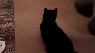 Bailey the Cat Jumps Through a Hole 2