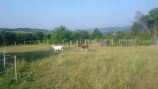 Horse vs donkey