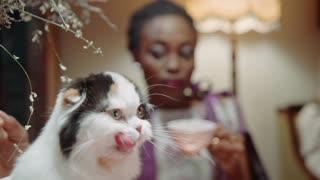 animal funny cat