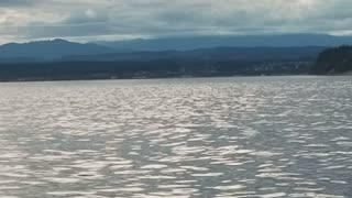 Killer Whales Circle in on Humpback Whales