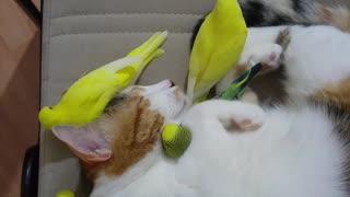Cat Cuddles a Bunch of Birds