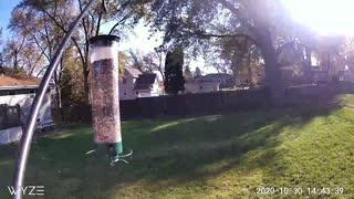 Squirrel Spinner