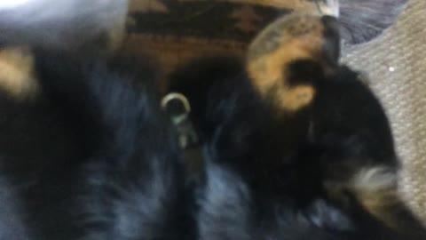 Cat and Dog Besties... So Cute!