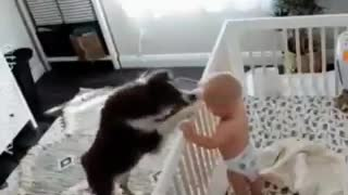 look at these animals playing with these beautiful babies