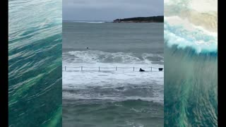 compiled funny surf