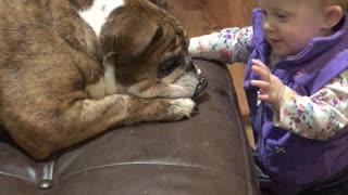 English Bulldog and Baby Share Sweet First Meeting