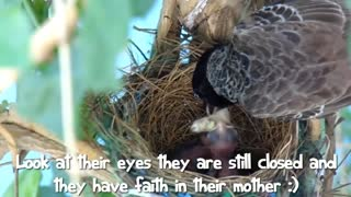 First Flight - a Baby Bird's Story..