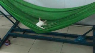 Hammock Keeps Kitty Happy