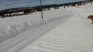 Doggo Joins in Snow Tubing Fun