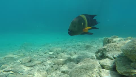 Fish swim in the Red Sea, colorful fish, Eilat Israel 7