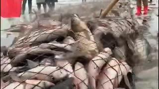 Big Net fishing 2021