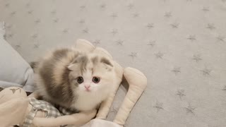 Baby cat will melt your heart