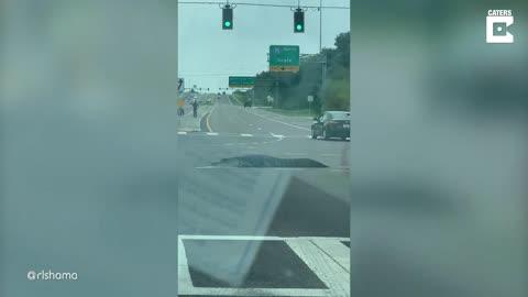 Alligator Walks Across Busy Traffic Junction