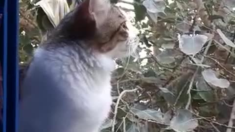 When cats long for the sound of birds