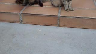 Dos Gatos Más Uno