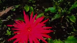 My Beautiful Flowers