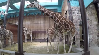 Milwaukee County Zoo Giraffe Exhibit