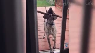 Funny Animals Will Make Your Day!!!