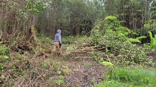 Homestead Expansion - Land Clearing By Hand