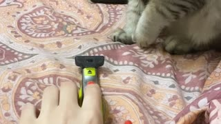 Cat Investigating Razor Jumps Wildly