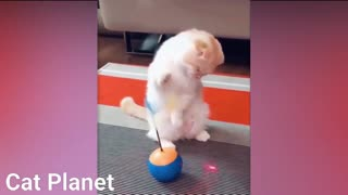 Funny funny Cats Video Compilation 2021