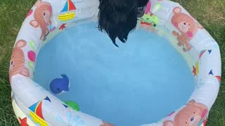 Dog tries bobbing for toys