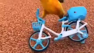 incredible bird riding a bicycle