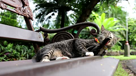 Cat On A Bench 2