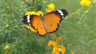 beautiful butterfly 123231132