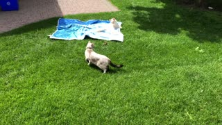 Chipmunk Plays with Furry Friends