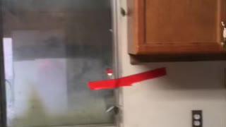 Disaster kitchen demo