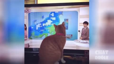 WATCH RIGHT MEOW! Cute Pets And Funny Animals Compilation