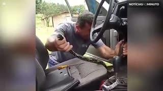 Cobra é capturada dentro de painel de carro