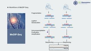 Epigenetic Modifications & Epigenomic Technologies