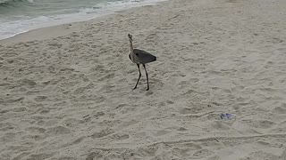 Bird watching at the beach