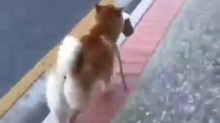 animals - work collect money