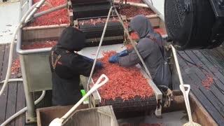 shrimping video test