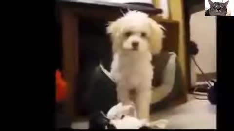 Best dog funny videos you don't watch that