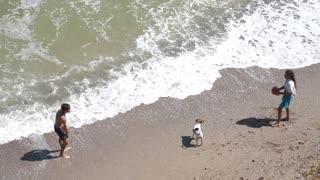 summer beach ocean with dog