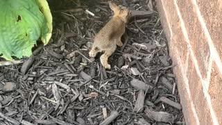 Lost Baby bunny