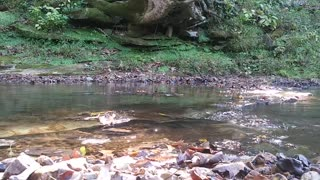 Mossy Stream Water Flowing Beautiful Scenic Outdoors Forest Sounds of Nature ASMR Trigger Noises