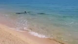 Dolphins swim near the shore