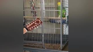 Parrot Talking Videos