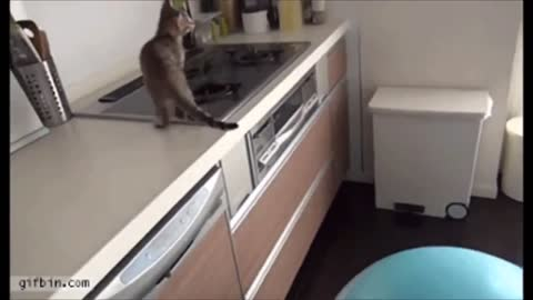 funny video cute animals funny