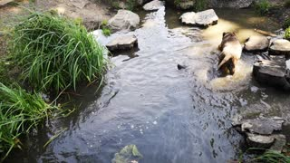 DOGS LOVELY WATER