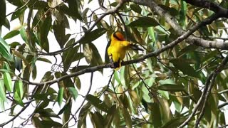 Bright bird cleaning their feathers - With great music