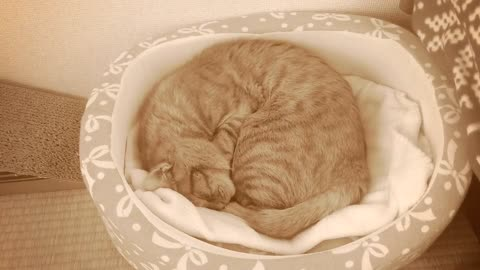 Kitten sleeping - rest pet