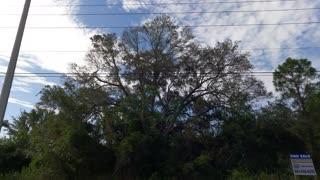 (00306) Part Two (P) - Punta Gorda, Florida. Sightseeing America!